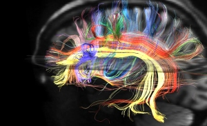 NeuralPathwayMap